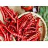印度S17去柄红辣椒 S17 red chilli