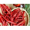 印度去把S17干辣椒供应 S17 red Chilli